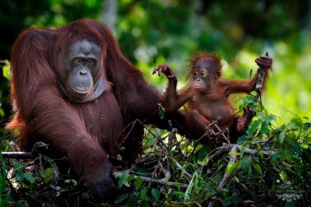 Vacances en famille en Indonesie